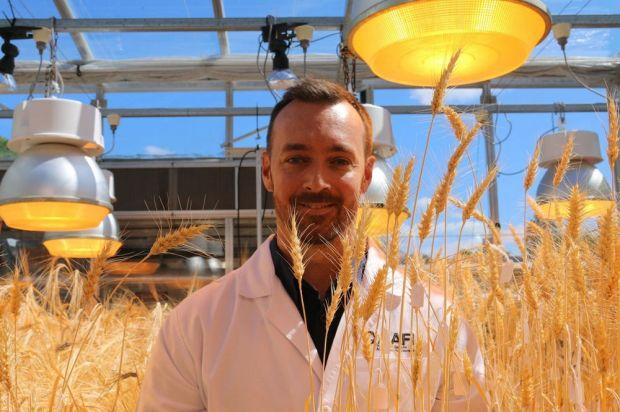 speed breeding wheat 2