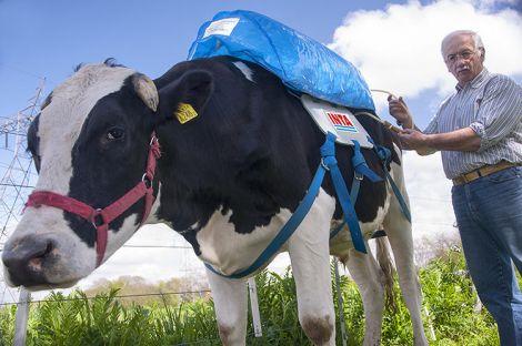 01 mucche metano