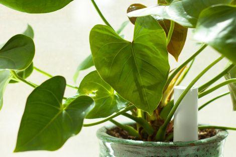 PlantLink02