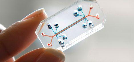 human organ on chip