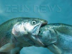 Il pesce grosso mangia quello piccolo, ma ogni tan