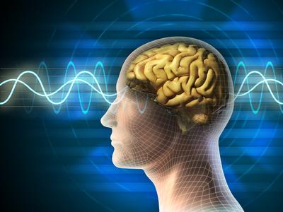 Cervello fotografato impare Pico Caroni