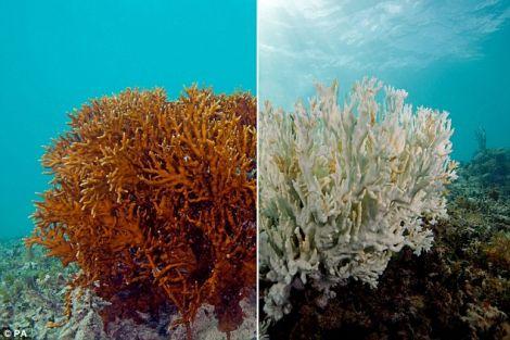 creme solari barriere coralline