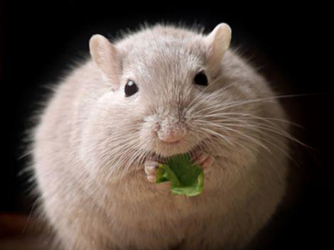 Scoperto l'enzima che causa l'obesità