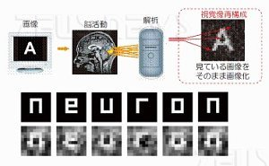 La macchina che legge i sogni dal cervello Neuron