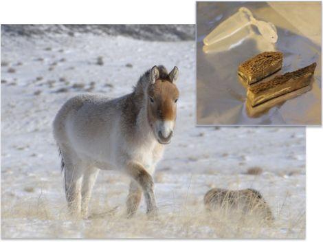 genoma dna cavallo 700000