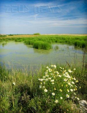 Biodiesel dalle alghe tra 7/10 anni