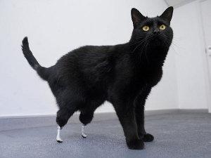 Oscar gatto bionico