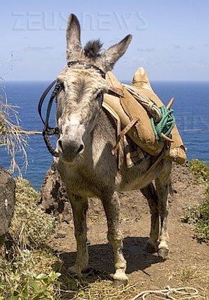 Scam parcel mule muli plichi pacchetti itv1