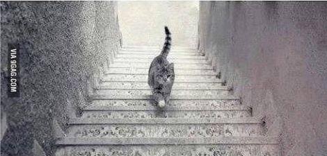 gatto sale scende