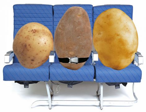 spuds patate wifi