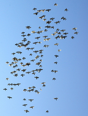Creative Swarm crowd funding Amato La Manna