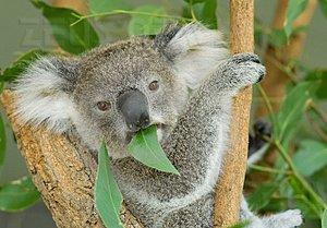 Ubuntu 9.10 Karmik Koala cloud computing