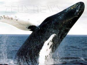 Whaling phishing dirigenti d'azienda Ceo