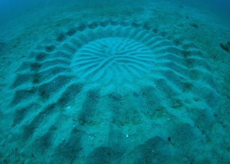 underwater mystery circle