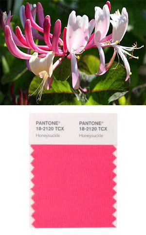 Pantone colore dell'anno 2011 Honeysuckle