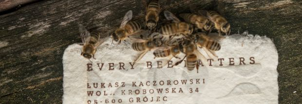 Bee Saving Paper Card lead