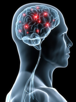 Lettura del cervello Bradley Greger Utah