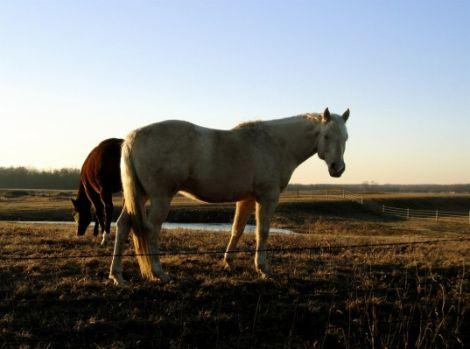 04 Horse