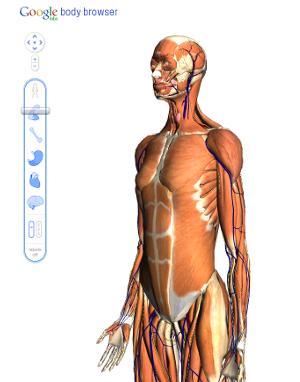Google Body Browser esplora corpo umano
