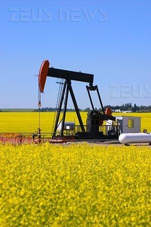 Biodiesel olio di colza biocarburanti