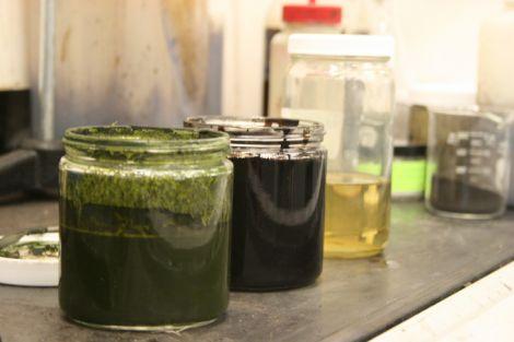 alghe petrolio 01