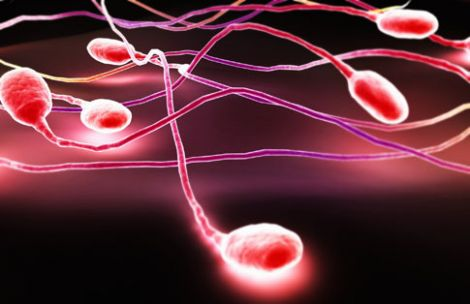 robot spermatozoi