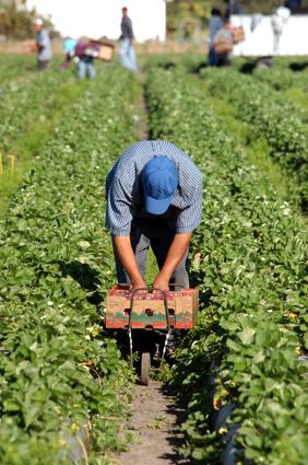 Eutelia IT dipendenti coltivano orti