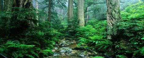 foreste tropicali co2
