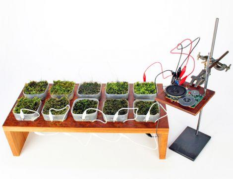 moss fm plant powered radio