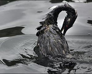 BP compra chiavi ricerca oil spill