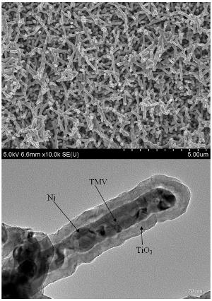 Virus mosaico tabacco batterie ioni litio