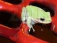 [immagine di una rana]