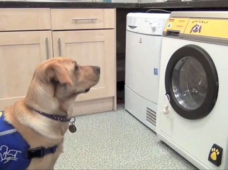 Woof to Wash