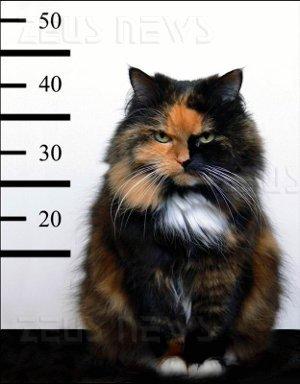 Arrestato pedopornografia accusa gatto Griffin