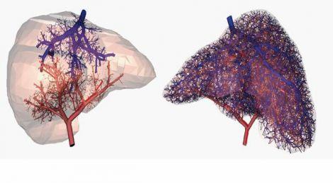 stampa vasi sanguigni 3D