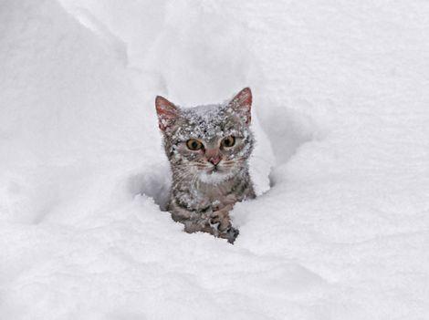 cat in snow not happy