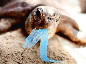 Bando sacchetti plastica Prestigiacomo Milleprorog