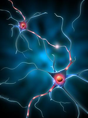 Memristor cervello di gatto sinapsi