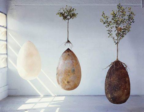 L'ecocimitero con le capsule biodegradabili per il corpo