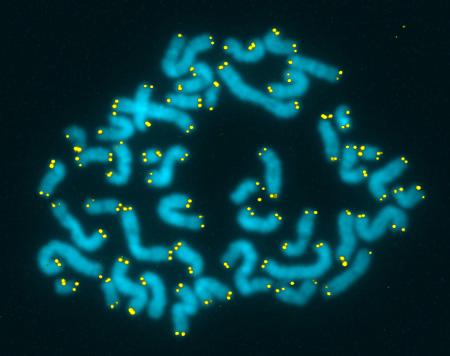 Life Length telomeri esame sangue età biologica