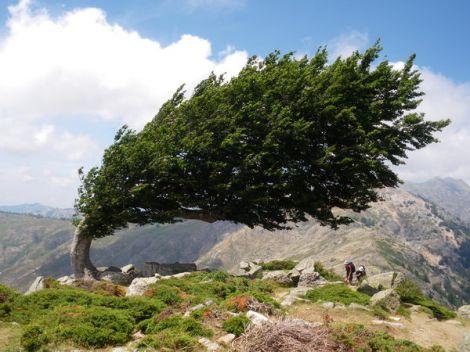 alberi vento energia