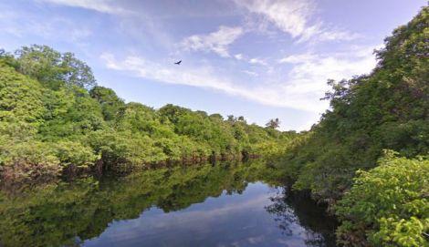 street view amazzonia