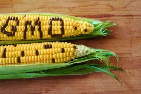 UE accordo OGM