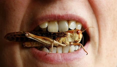 insetti mensa scolastica