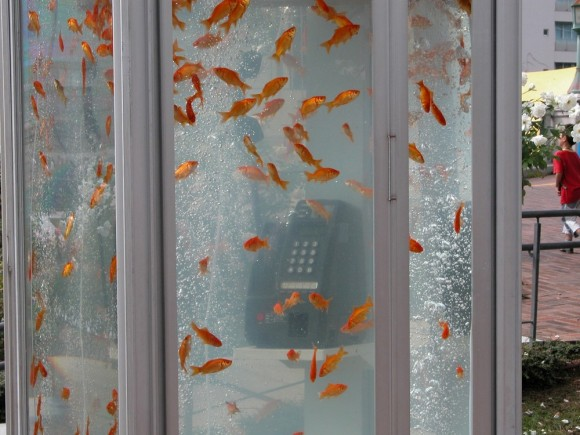 Cabina Telefonica Londinese Wikipedia : Come rottamare la cabina telefonica con un acquario zeus news