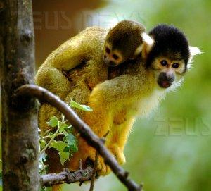 Terapia genica cura daltonismo scimmia scoiattolo