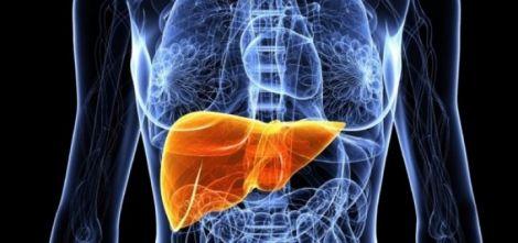 organovo fegato 3D