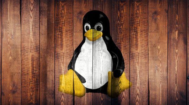 linux kernel linus torvalds termini inclusivi