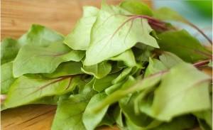 Idrogeno spinaci fotosintesi